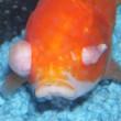 one eyed fish